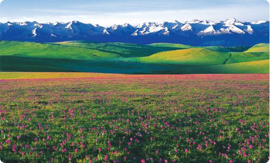 左边2 喀拉峻国际生态旅游区.jpg