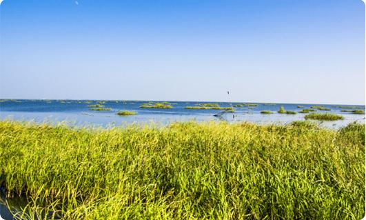 左边3 鄱阳湖湿地公园.jpg